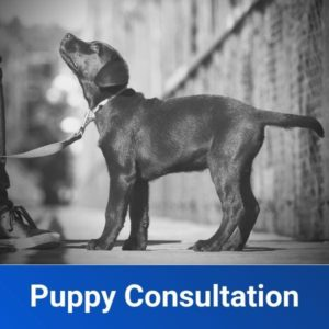 Puppy Training Consultation